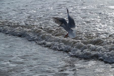 Möwe über den Wellen