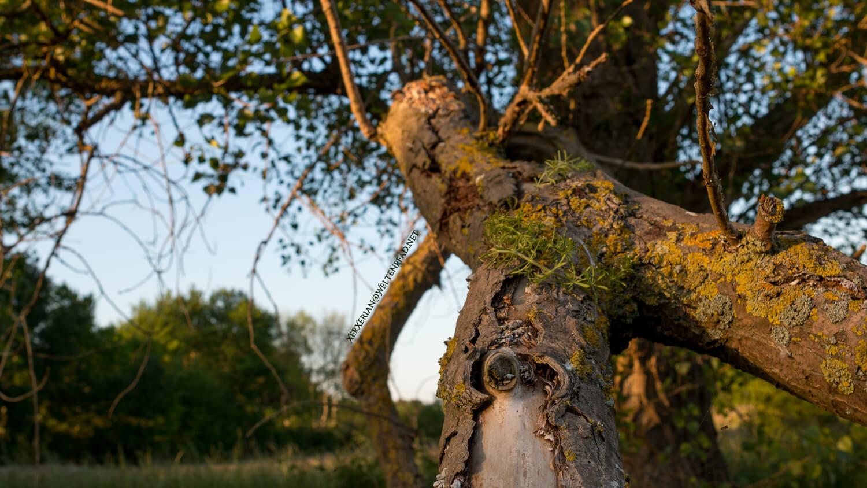 Wachstum - Baum auf einer Wiese
