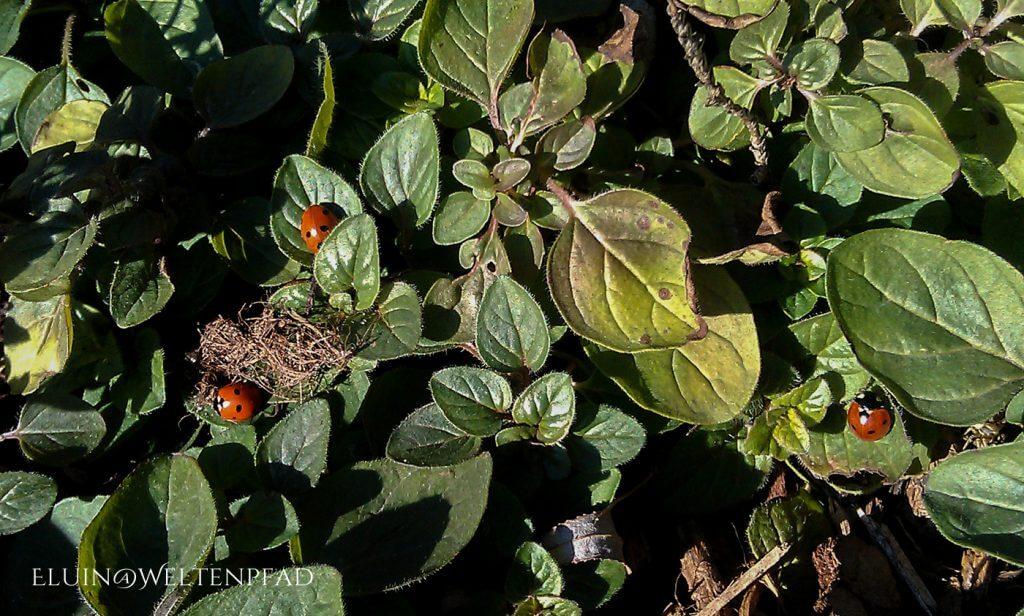 Flieg, kleiner Käfer