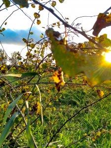 Blätter und Sonnenstrahlen am Feldweg