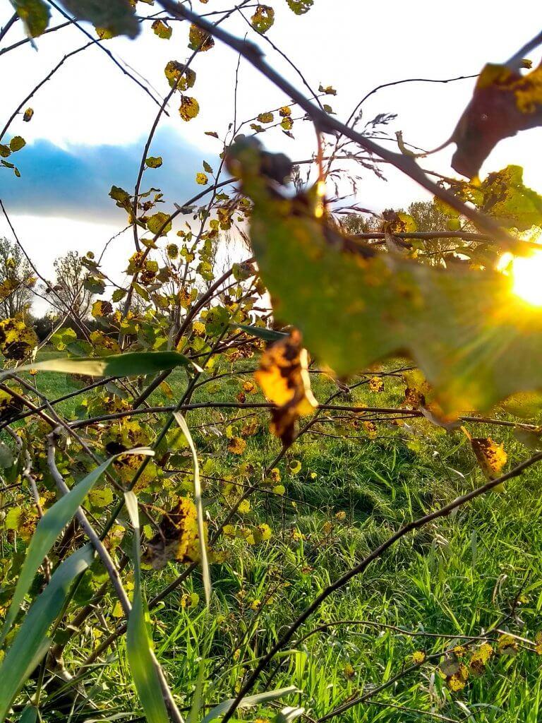 Sonne, Wind und die Abenddämmerung - ein märchenhafter Inspirationsspaziergang