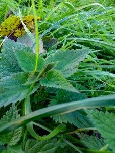 Herbstblätter, Brennesel und Gras mit Wassertropfen