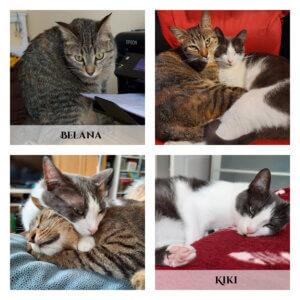 Belana und Kiki - zwei Katzen