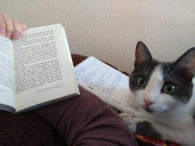 Überarbeiten mit Kiki Katzenfoto