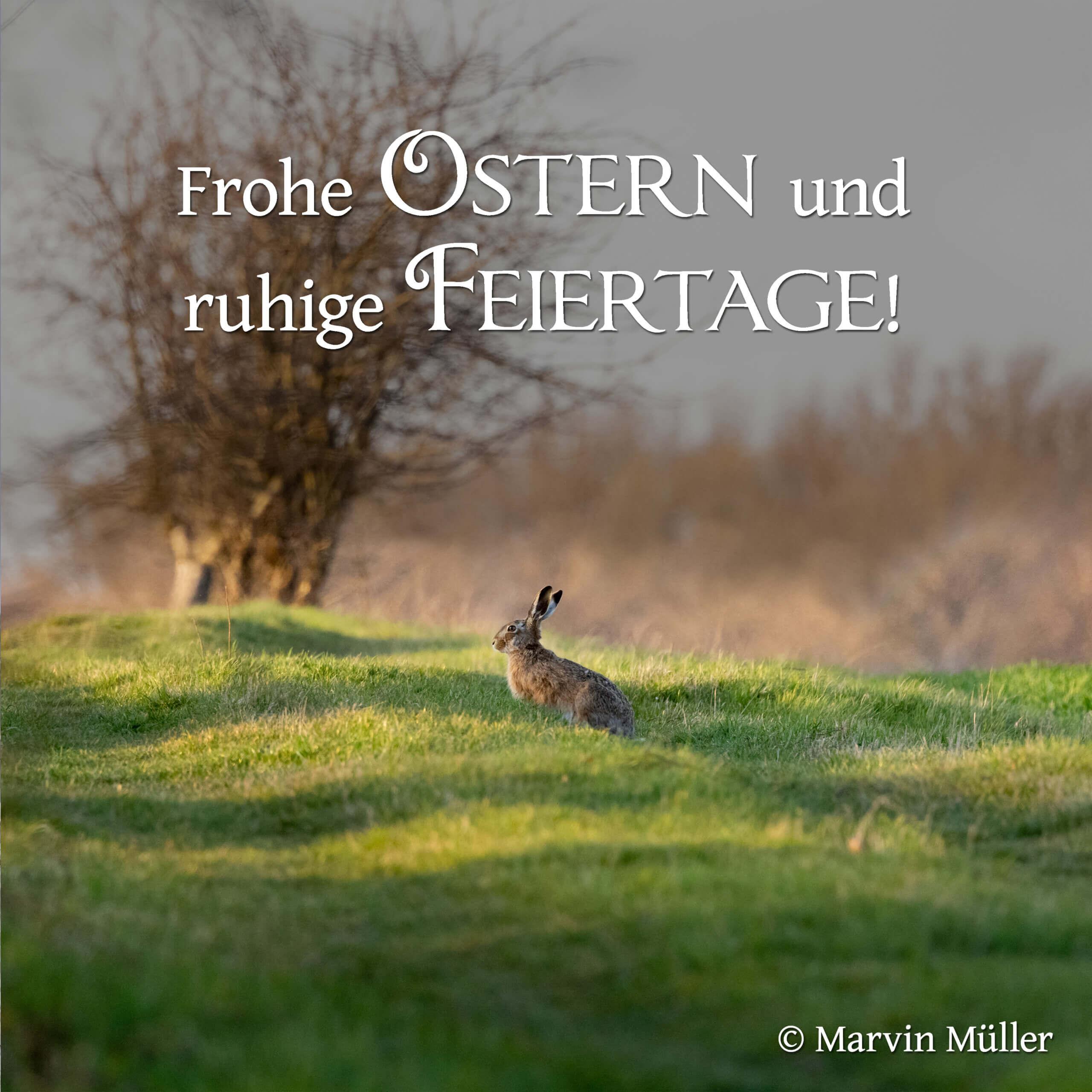Ostern 2021 - Ein Hase im Gras