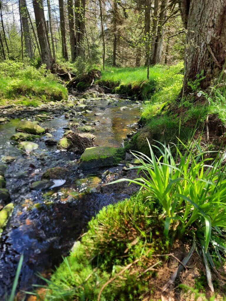Wanderung im Harz am Wasser entlang