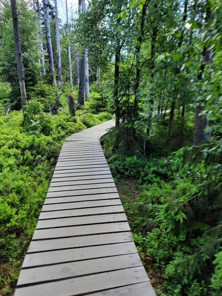 Holzsteg am Oderteich im Harz