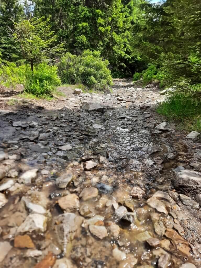 Aufstieg zur Wolfswarte: ein Weg mit Steinen über den Wasser fließt